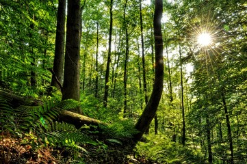Sunnyday in forest