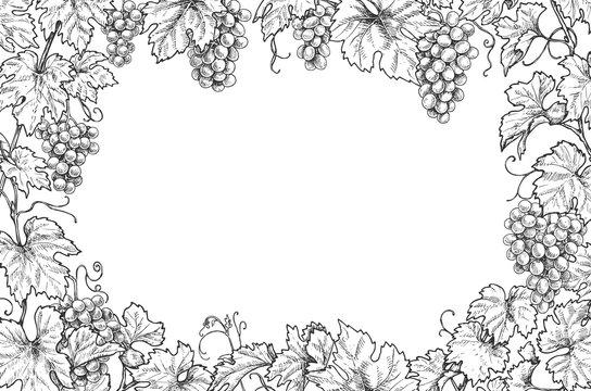 Monochrome Grape Branches Horizontal Frame