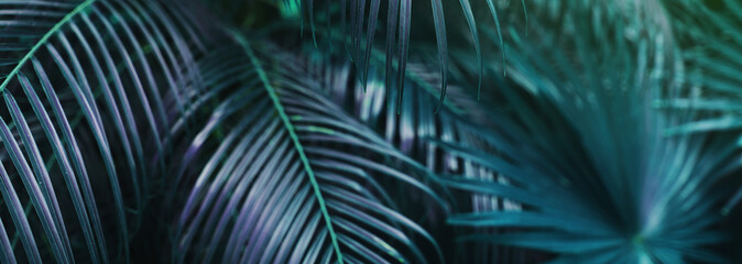 Website banner of tropical palm leaves an foliage in dark soft colors. Concept of blog heading, tropical theme, summer blog header. flora and plants.