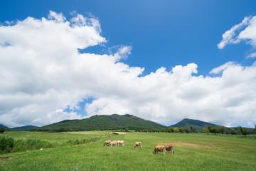 蒜山高原 ジャージー牛のいる牧場(岡山県真庭市蒜山地域)