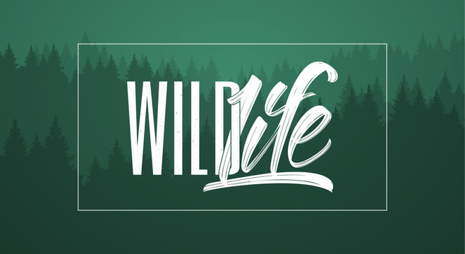 Vector illustration: Hand drawn brush typography lettering composition of Wild Life on green forest background