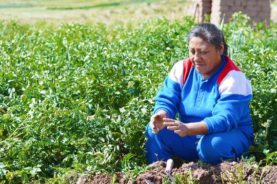 Native american woman on the field of potato.