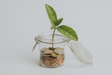 Coins in a glass jar with a green plant growing inside, on white background, with vintage filter.