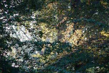 Sonnenstrahlen durch Herbstlaub im Wald