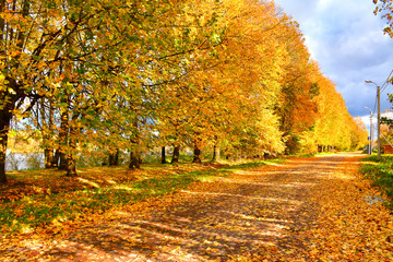 Golden autumn in the village of Ust-Izhora, Leningrad region.  The Bank of the river Neva.