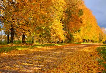 Golden autumn in the village of Ust-Izhora, Leningrad region.  The Bank of the river Neva.