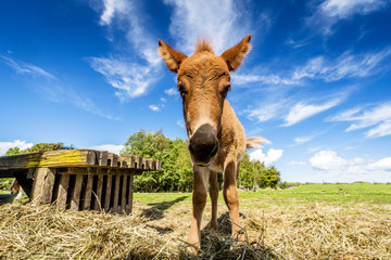Cute mule standing in a farm yard