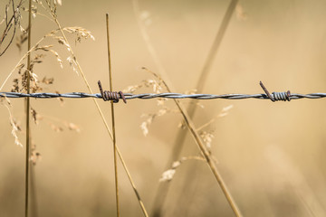 Barb wire close-up on a golden field