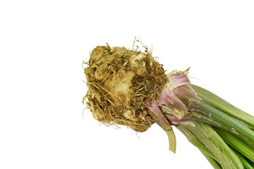 celery root on white background