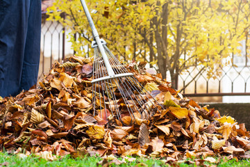 Man collecting fallen autumn leaves first person view