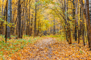 Path in a forest with colorful autumn leaves