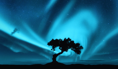 Aurora borealis and silhouette of a tree on the hill. Aurora. Northern lights. Sky with stars and polar lights. Night landscape with bright aurora, tree, blue sky. Nature background. Concept