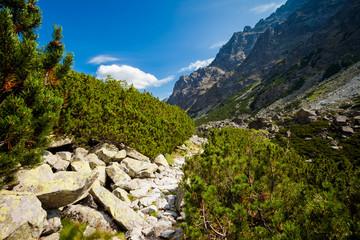 Slovakian Velka Studena Dolina Tatra