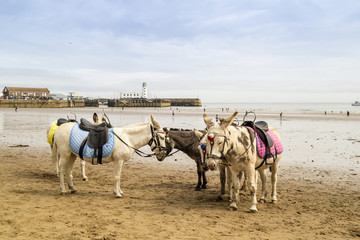 Small group of donkeys at a sandy beach resort in UK.