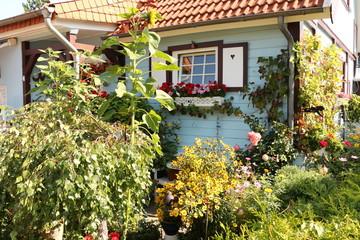 Farbenfroher Vorgarten im Zentrum von Boltenhagen Wall mural