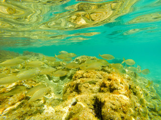 Underwater view of fish shoal