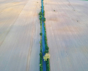 Aerial view on straight and narrow asphalt road in the center of wheat field.