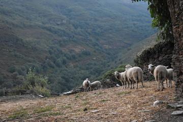 Paisaje con ovejas en la montaña