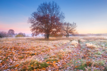 The end of autumn
