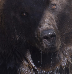 bear in the zoo, took pictures of a close distance