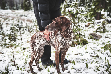 a beautiful hunting dog and owner hiking in the mountain snow