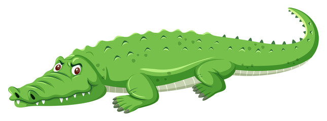 A green crocodile on white background