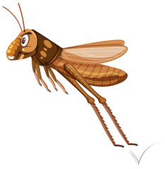 A brown grasshopper jumping