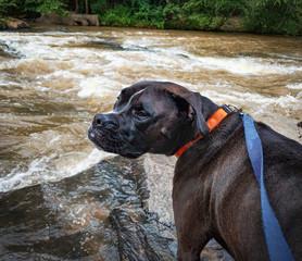 Dog Walks At The River