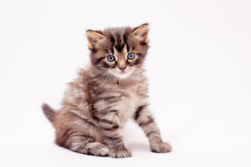 Small striped kitten on a white isolated background_