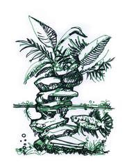 Betta splendens.Aquaterrarium drawing .