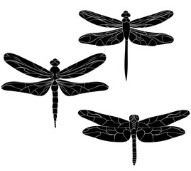 silhouette of the dragonfly