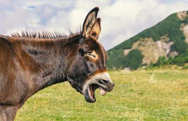 Humorvoller Esel