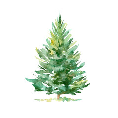 Spruce tree.Coniferous forest.Watercolor hand drawn illustration.White background.