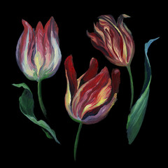 Set of rose tulip and leaf on black background