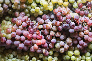 Background of purple and green grapes