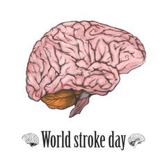 """World stroke day"" illustration. Digital painted brain isolated on a white background. Realistic drawing. The part of the human body."