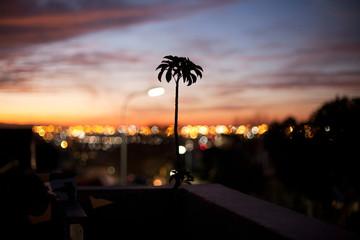 Plant silhouette against a sunset cityscape