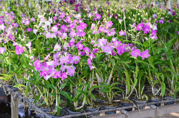 Beautiful orchid flowers in farm