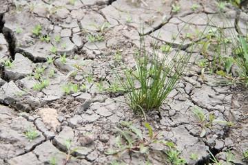 ausgetrockneter Boden 1