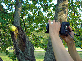 Photographer takes a photo of an Apple in the summer garden.