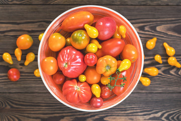 Many different red orange yellow tomatoes on dark wooden surface. Beautiful food art background, top view.