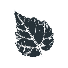 Vector birch leaf print of birch tree. Inkprinted leaves of the trees on paper. Traced vector image.