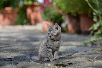 Hilfe. Kleiner getigerter Katzenwelpe sitzt auf Steinboden mit verklebten Augen auf Grund von Katzenschnupfen