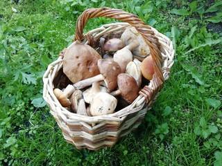 Сибирские грибы в плетеной корзинке