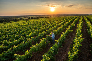 Top view. a senior winegrower works in his vines at sunset