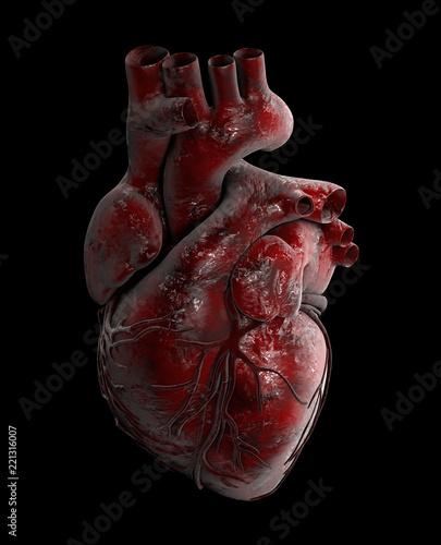 Human Heart - Anatomy of Human Heart 3d Illustration\