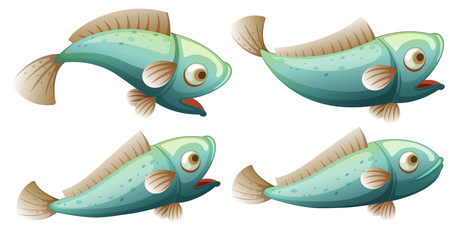 A set of fish on whitr background