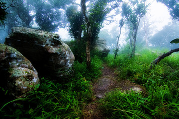 Misty forest in the morning. Pahinngam National Park. Chaiyaphum Province in Thailand