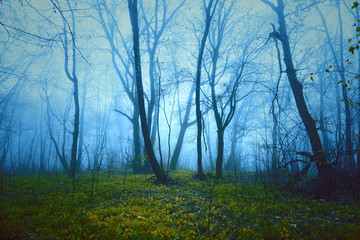 Wall Mural - Fantasy saturated foggy forest background. Color filter effect used.
