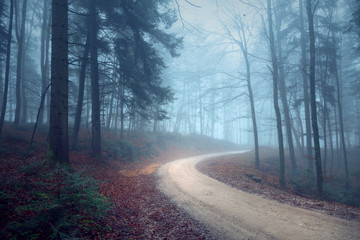 Wall Mural - Foggy autumn seasonal forest road. Magic blue light in the woodland.